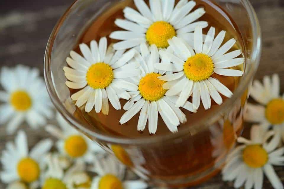 Manzanilla-flor-medicinal