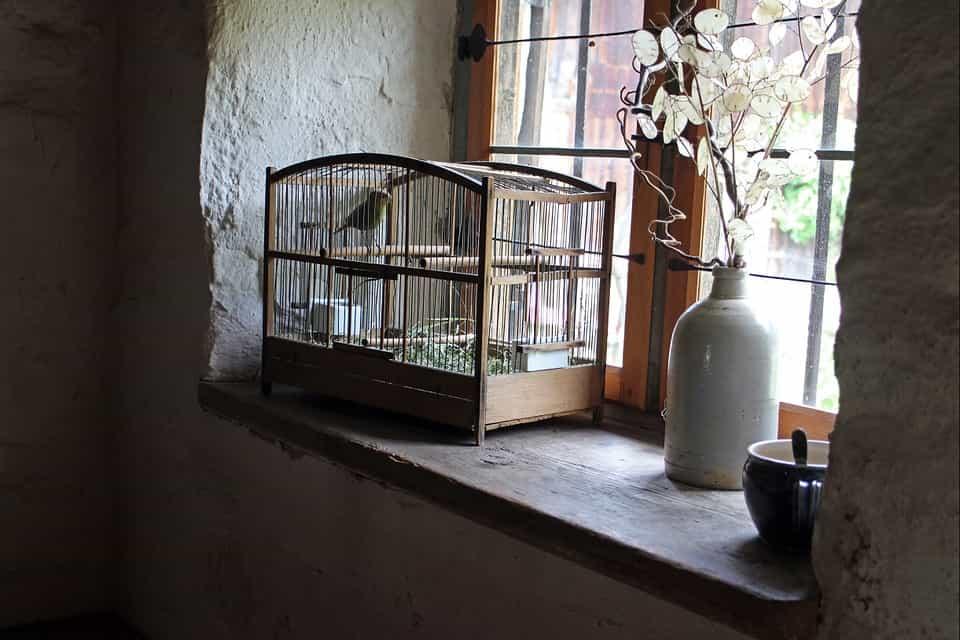 Aves-jaula