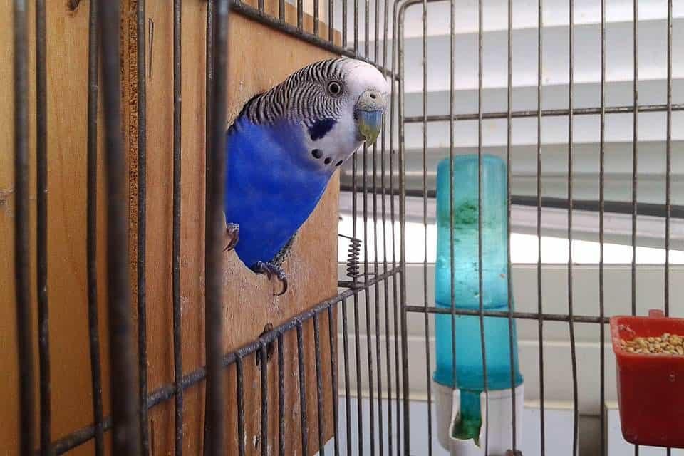 Tipos jaulas aves