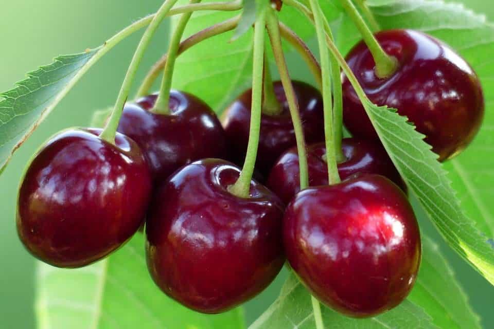 Cerezo-frutales-enanos