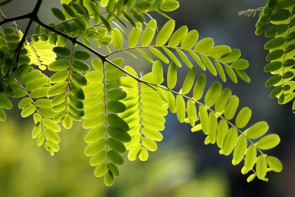 Magnesio-plantas