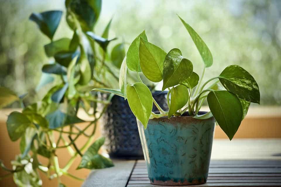 Planta-interior-verde