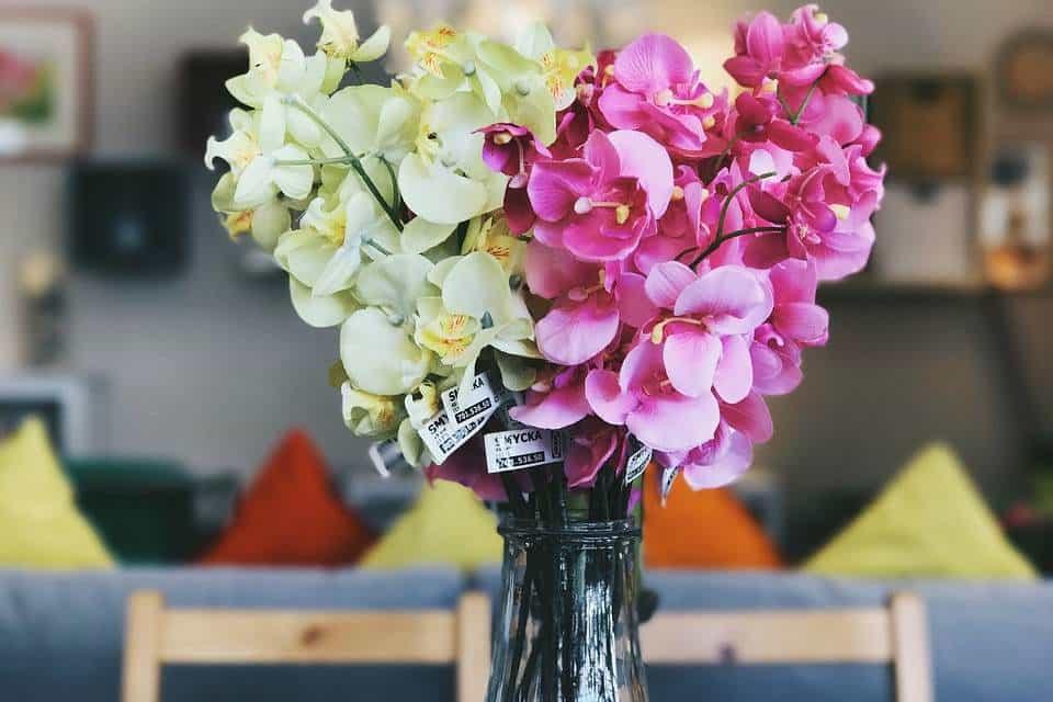 Plantas-de-interior-con-flor
