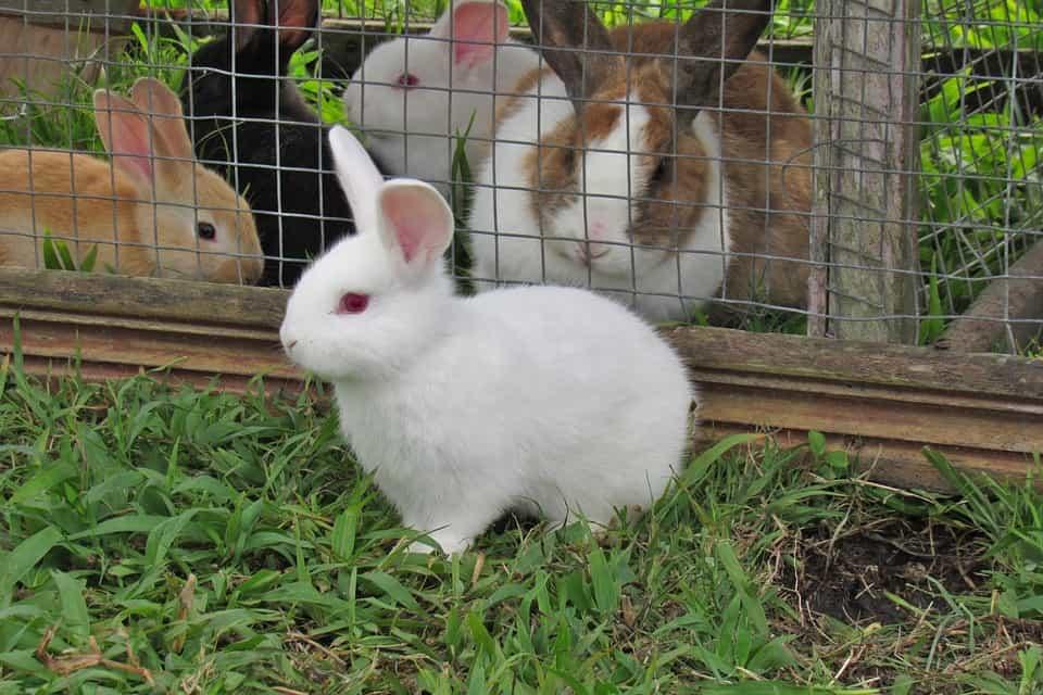 Tipos de jaulas para conejos