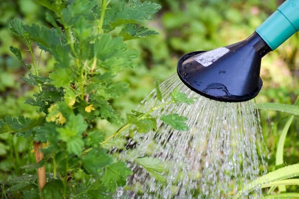 Acidificar-agua-de-riego