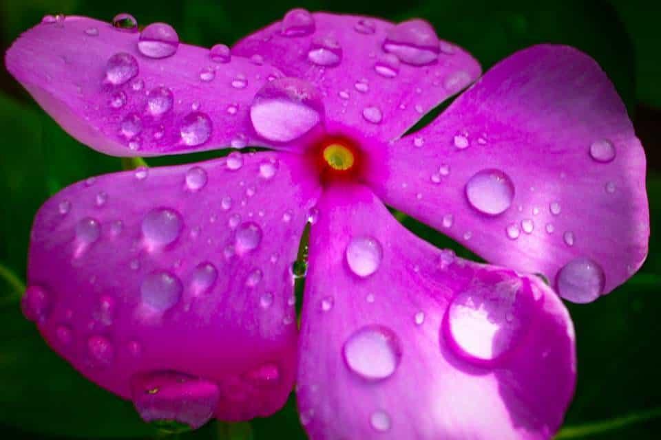 Acidificar-agua-plantas