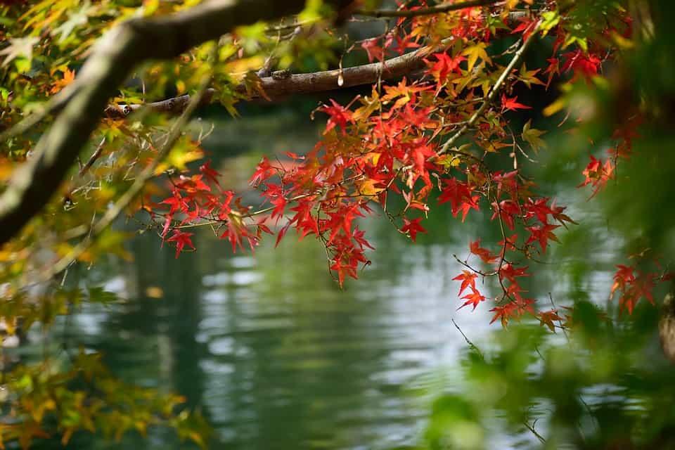 Belleza-arces-japoneses