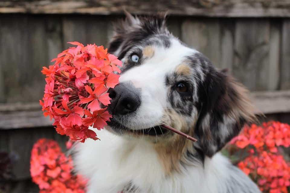 Las-plantas-y-los-perros