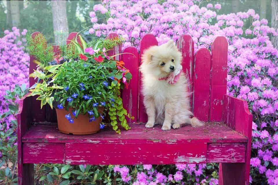 Plantas-proteger-perro