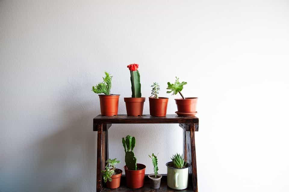 Tipos-de-cactus