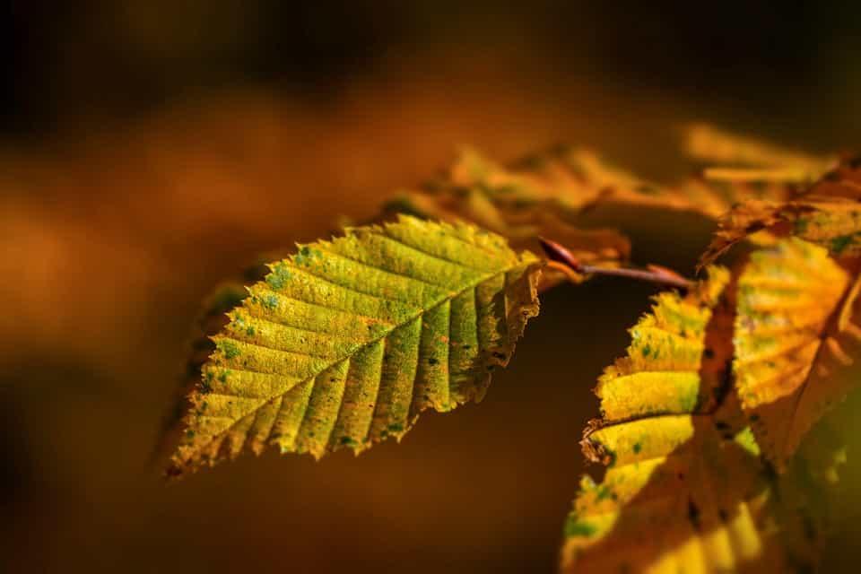 Aplicar-abono-foliar