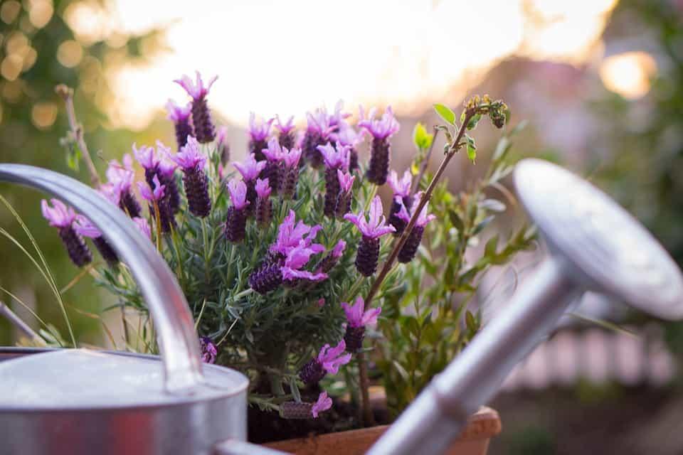 Hidratar-salvar-plantas
