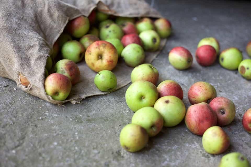 Manzanos-plantar