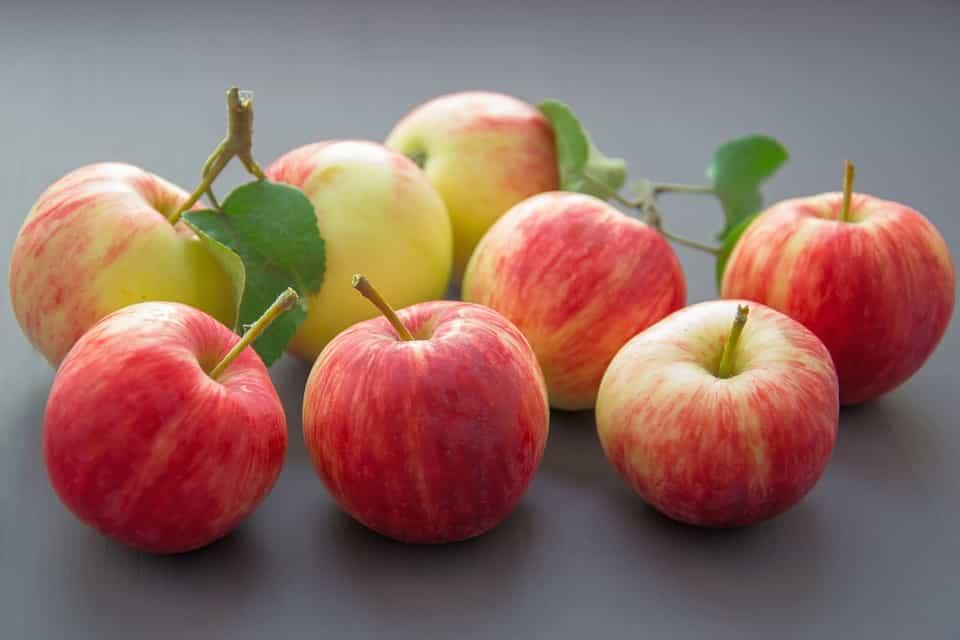 Plantar-manzanos-sembrar