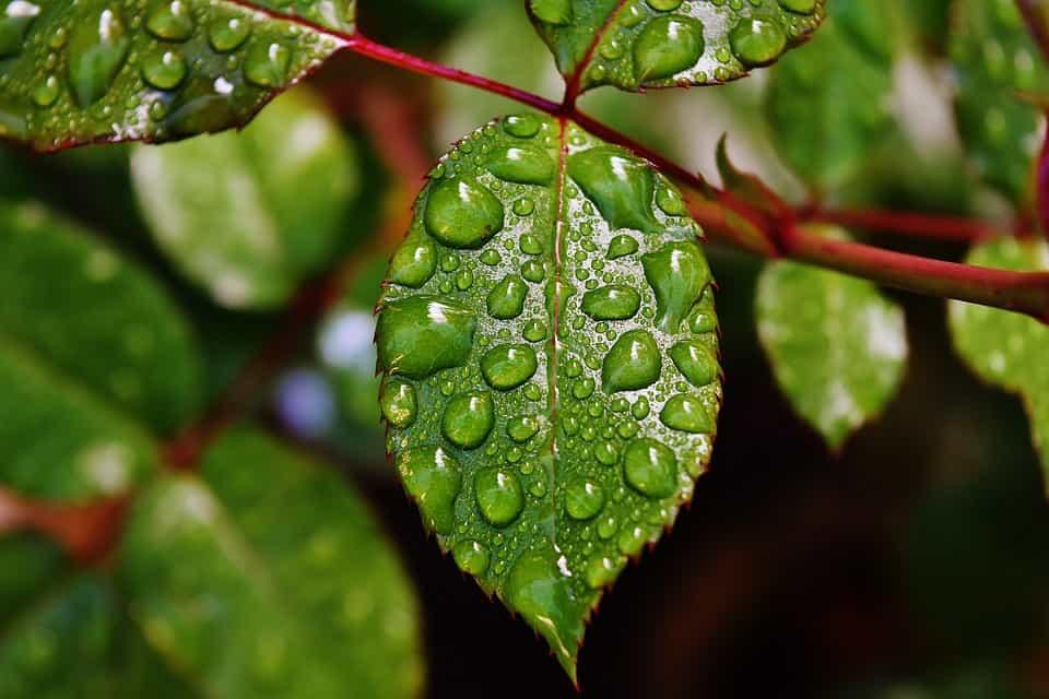 Pulverizar-plantas-salvar