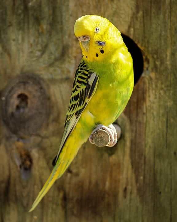 Cuidados-actividades-aves