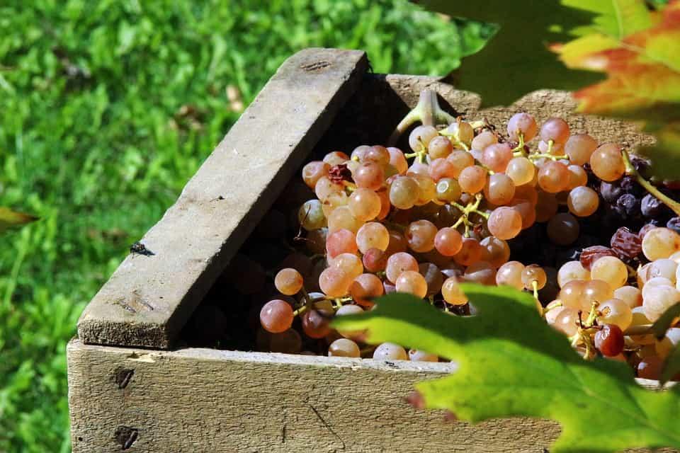 Productos-recolecta-de-uva