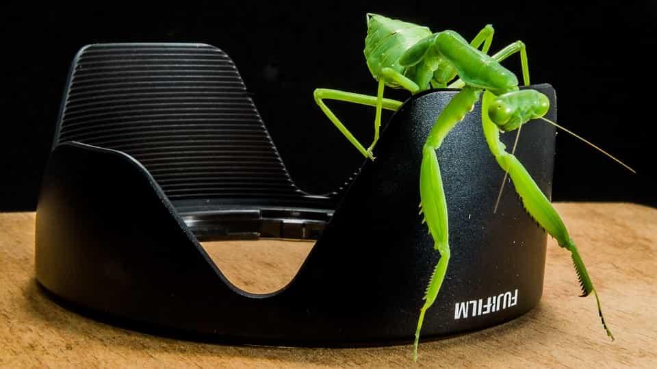 Repelente-de-insectos